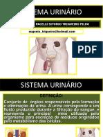 09 Sistema Urinário