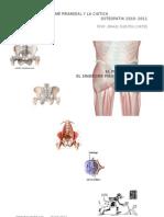 osteopatia El pelvis y el sindrome priamidal