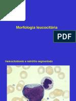 Morfologia leucocitária.ppt