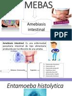 2. Entamoeba histolytica UNIDADAD 2