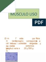 muscular-lisa