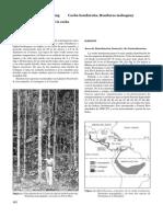 Swietenia macrophylla  - CAOBA ( p[1][1].v.)