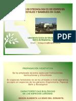 MANEJO BIOTECNOLOGICO DE ESPECIES FORESTALES Y BAMBUES EN CUBA