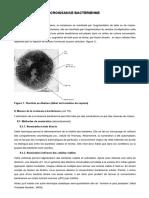 CROISSANCE BACTERIENNE.pdf