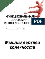 Лекция № 7 Функциональная анатомия мышц конечностей.ppt