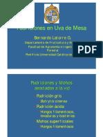 02_Bernardo_Latorre; Botrytis, Penicillium.pdf