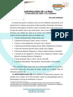 ARQUETIPOLOGÍA DE LA RISA (1)