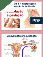 Fecundação e gestação (4).pdf
