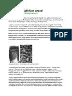 Pyrodictium abyssi