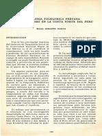 Medicina Folklórika Peruana
