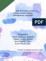 Anatomia de La Region Crural, hernias crurales y diafragmaticas