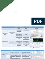 Actividad 2 - Cuadro comparativo sobre la estructura y función de las células del sistema nervioso.pptx