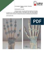 04 - Trabalho-  sistema articular e muscular BBPMI 2016