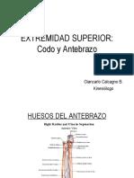 Codo_y_Antebrazo