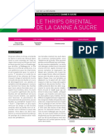 fiche-phyto_thrips-final