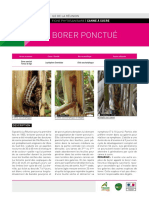 Fiche-phyto-borer-ponctué