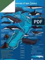 Marine Mammal Poster