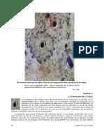 Capítulo 2 La estructura de la célula