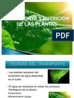 Transporte y nutrición en las plantas parte 1