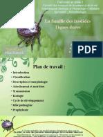 maladies-vectorielles (4)