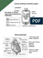 10_sirds_fiziologija