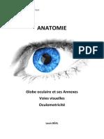 Anatomie de la vision