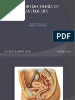 Aparato  reroductor Femenino y Masculino