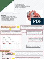 Potenciales de Marcapasos y miocardiocitos