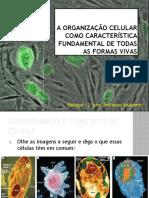 B4 - A Organização Celular como Característica Fundamental de Todas As Formas Vivas.pptx
