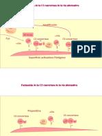 AnimacionesInmunología1