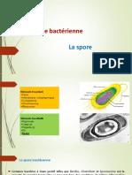 La spore bactérienne fin