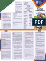 Elections English.pdf