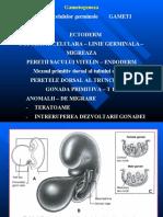 3-embriologie-1.ppt