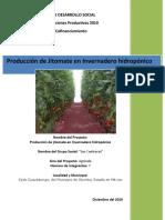 producción de jitomate HIDROPÓNICO EN Invernadero.r