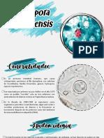 Cyclospora cayetanensis