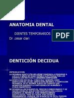 ANATOMIA DENTAL TEMPORALES