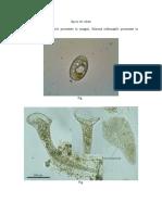 LP 2 imagini ciliate - test