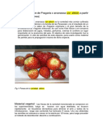 Micropropagacio_n de Fresa. LUIS_