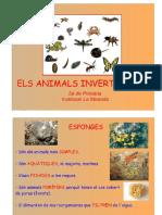 Tema 10 (1) - Animals Invertebrats