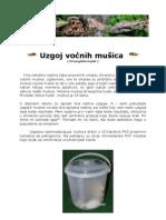 Uzgoj vocnih musica