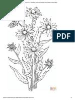 Rudbeckia Hirta or Black Eyed Susan coloring page _ Free Printable Coloring Pages