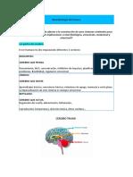 neurobiologia en trauma