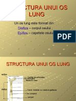 structura_unui_os_lung