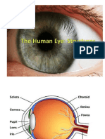 The Human Eye PowerPoint (1).pptx