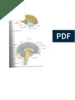 Human Anatomy - Ch. 11 Study Guide