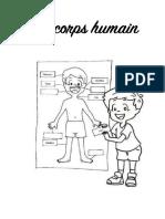 Activités sur le corps humain