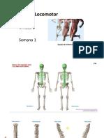 Unidad 3 Columna vertebral Semana 1.pdf