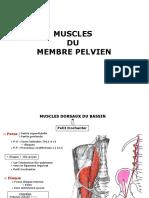 Myologie membre pelvien