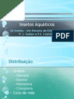 Insetos aquáticos
