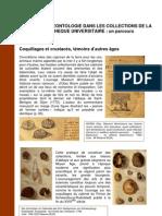 Paleontologie